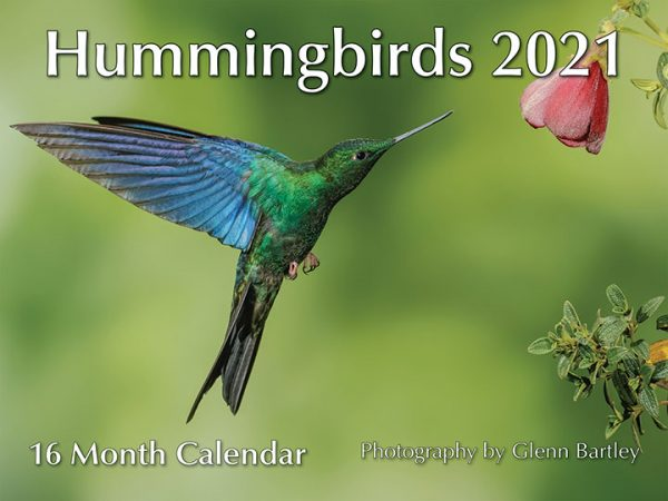 Hummingbirds 16 month Calendar 2021