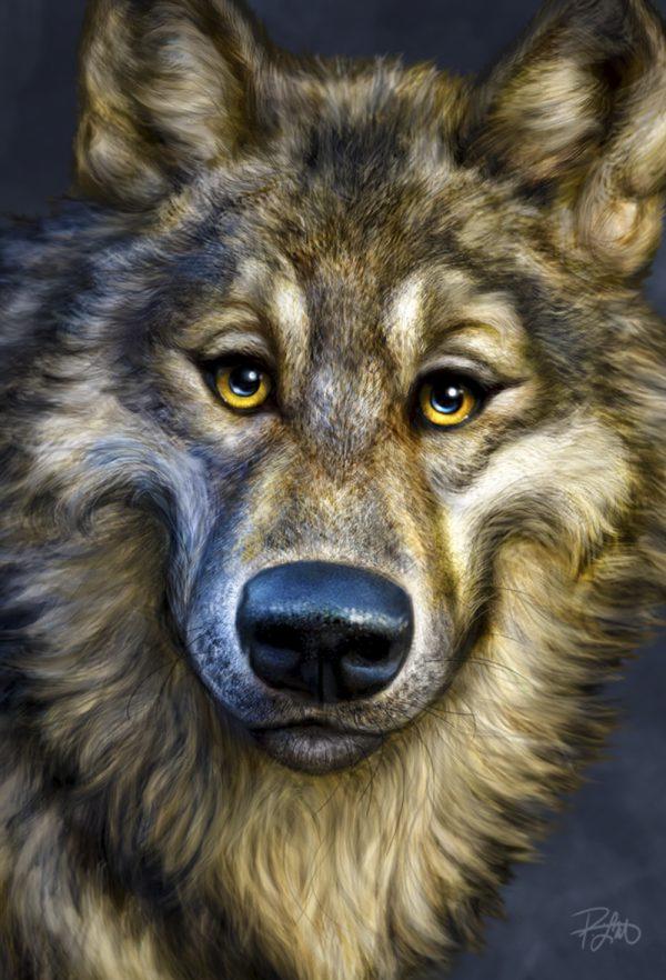 Patrick Lamontage Wolf