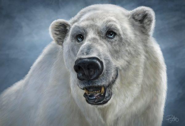 Patrick Lamontagne Polar Bear
