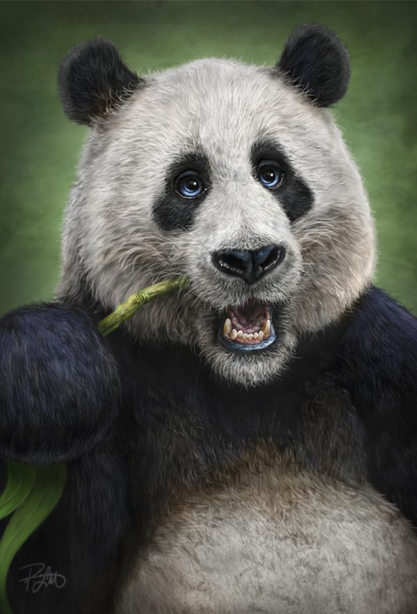 Patrick Lamontage Panda